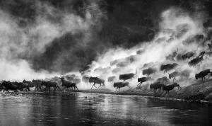 PhotoVivo Merit Award - Jiazi Liu (China)Wildebeest River