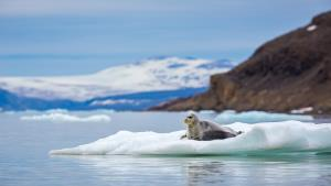 PhotoVivo Merit Award - Craig Parker (Australia)Bearded Seal No4