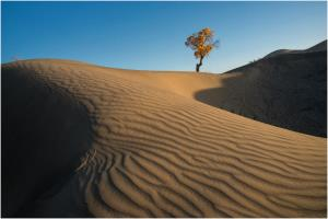PhotoVivo Honor Mention - Goh Wee Seng (Singapore)Tree With Dune