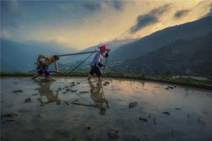 PSPC Merit Award - Chaoyang Cai (China)Spring Ploughing1