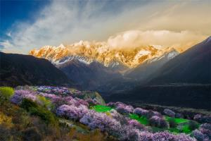 PSPC Merit Award - Xie Ying (China)Peach Blossom In Mountain