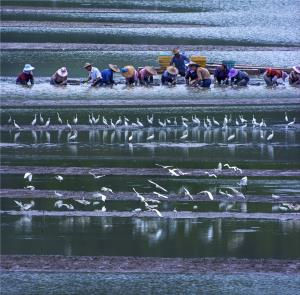 PhotoVivo Silver Medal - Chunsheng He (China)Natural Harmony
