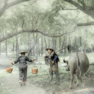 IUP Honor Mention - Pinguan Zheng (China)  Plough