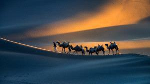 IUP Honor Mention - Zhenghua Peng (China)  Desert Travelers