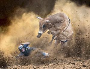 SPC Gold Medal - Min Xiong Liang (Australia)  Crazy Bull