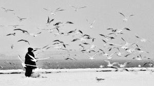 PSA HM Ribbons - Bekir Yesiltas (Turkey)  Aviculture1