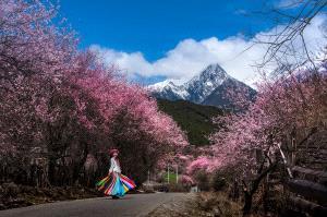 SPC Silver Medal - Ya Kuang (China)  Nyingchi Peach Blossom