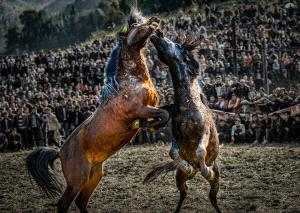 SPC Merit Award - Liangquan Yu (China)  Verve Of Horse Fighting