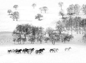 SPC Merit Award - Zhong Chen (China)  Strolling In Snow Bw