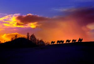 SPC Gold Medal - Zhong Chen (China)  Herd Back With The Setting Sun