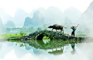 SPC Merit Award - Songmao Yu (China)  Morning Ploughing