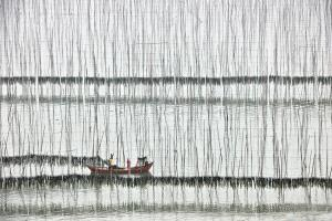 SPC Merit Award - Yigan Liang (China)  Bask The Kelp