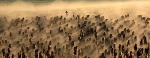 PhotoVivo Gold Medal - Qiang Lv (China)  Horses Galloping