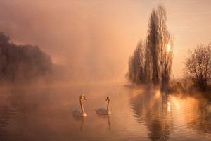 IUP Honor Mention - Chunling Li (China)  Swan