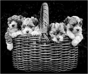PhotoVivo Honor Mention - Francis Kennedy (Australia)  Basket Full Of Trouble