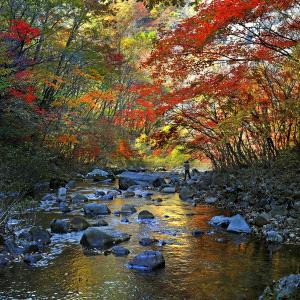 SPC Merit Award - Mingqin Yin (China)  Autumn Scenery