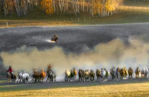 SPC Merit Award e-certificate - Hsiuling Chiu (Taiwan)  Mongolian Horse Herd Galloping
