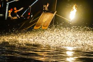 PhotoVivo Gold Medal - Lilo Chen (Taiwan)  Bonfire Fishing-C