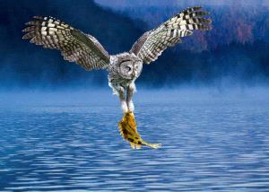 PhotoVivo Gold Medal - Deshang Zhou (China)  Hunting