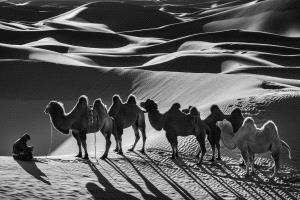 SPC Merit Award e-certificate - Zhiyu Wu (China)  Camels11