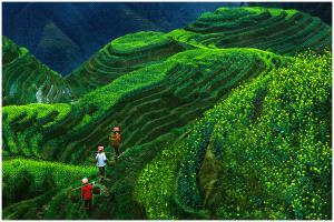 PhotoVivo Gold Medal - Thomas Lang (USA)  Longji Terrace