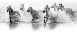 SPC Merit Award e-certificate - Shenghua Yang (China)  Running Horses