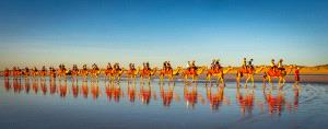 SPC Merit Award e-certificate - Marlene Chaitra (Australia)  Camel Train Reflections