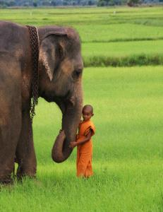 PhotoVivo Gold Medal - Pat Choo (Singapore)  Monk With Jumbo
