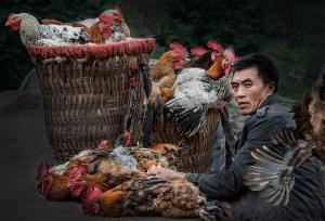 SPC Merit Award e-certificate - Xiufang Lv (China)  Sell Chicken